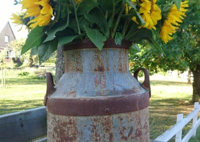 Solrosor i mjölkkanna, Blomstertäppan i Hällaryd
